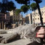Gatos_Roma